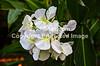 GulfCoast031-White Flower