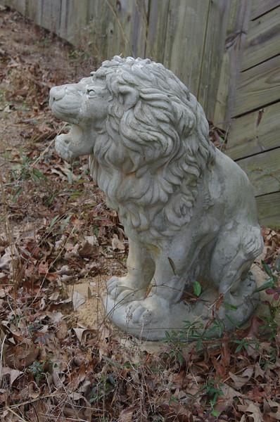 Animeaux Lion