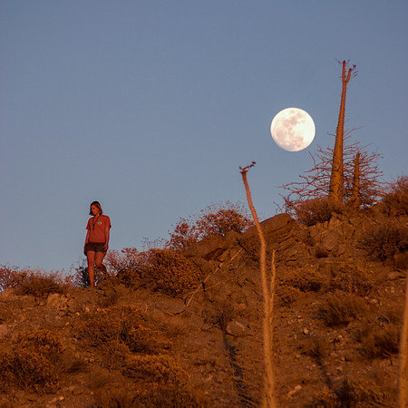 Moonrise over Boojam trees in Puerto Libertad