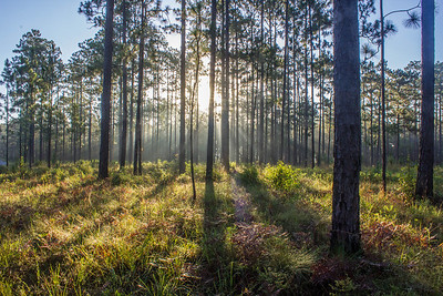 Sunrise in Blackwater River State Forest near Milton, Florida.