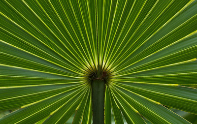 Sunlight makes its way through a palm frond in the endangered coastal scrubland habitat of the Florida panhandle, Naval Live Oaks.