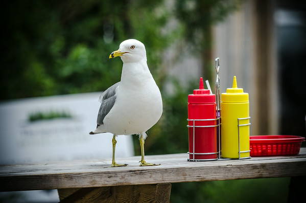 Seagull and condiments