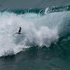 Heermann's gull surfing the waves