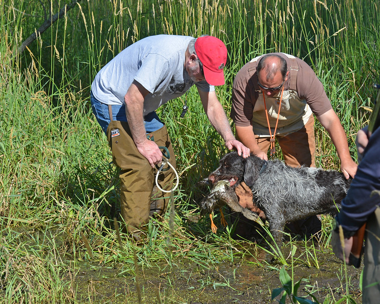 Jar z Lovčických tarasů  practices duck track and retrieve with owner, Craig Kukay.