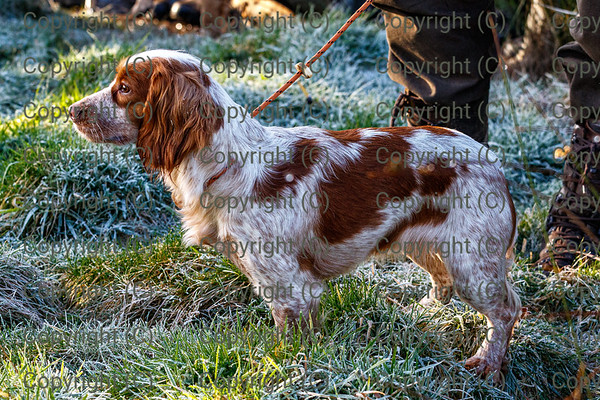 DVWGC Novice Cocker Trial 200120 at Osmaston