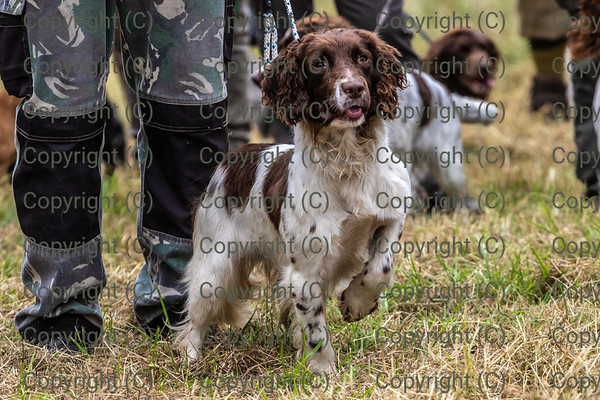 Dove Valley Working Gundog Club 25th Anniversary