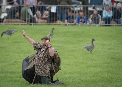 Chris Green - Wild Fowling - DSC_0564
