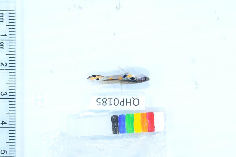207_DSC_1963