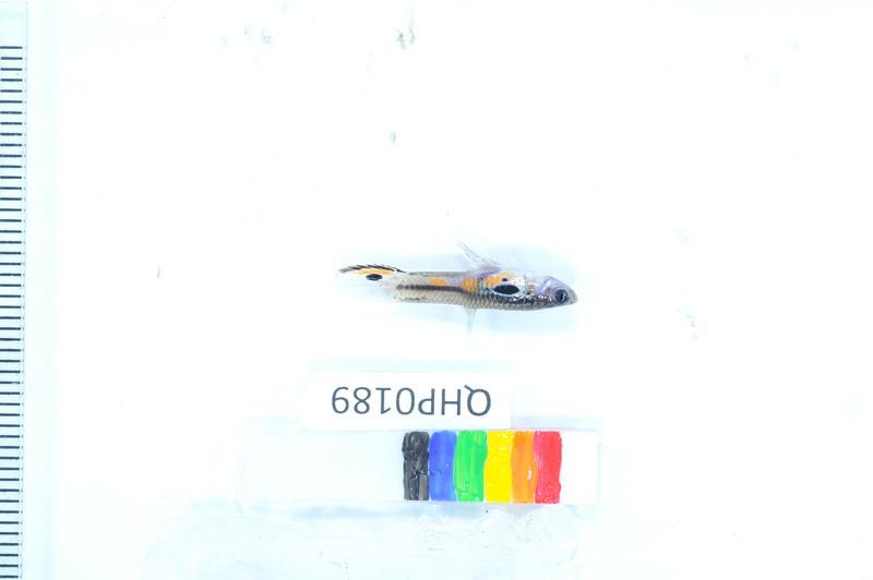 053_DSC_1981