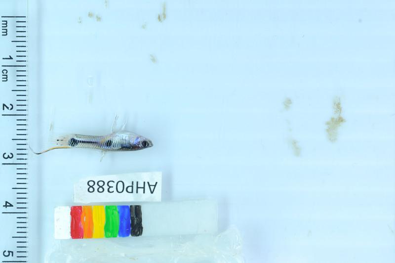 399_DSC_3991