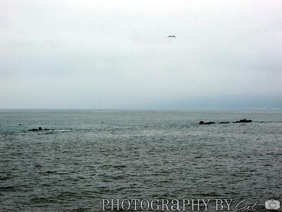 The pacific ocean as seen off of the Santa Monica pier