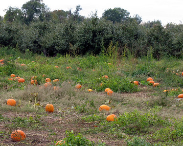 You can pick your own pumpkins there but we didn't.