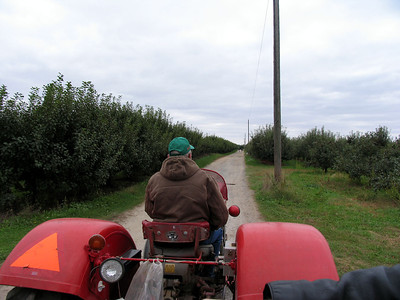 Taking the tractor ride out to the orchard to find good apples.