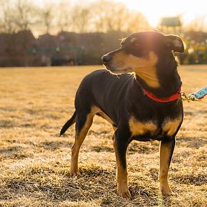 Gus at the park.
