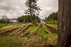 Haida longhouse remains with memorial and morturay poles lookin towards Kunghit Island