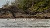 Sea kayakers off SE Moresby Island, Gwaii Haanas National Park Reserve, Haida Gwaii, BC