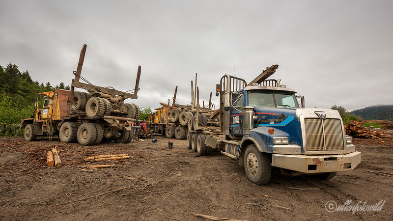 Multi-axle logging trucks, log sort yard, Alliford Bay, Morseby Island, Haida Gwaii, BC