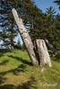 Remains of mortuary poles, K'uuna Llnagaay (Skedans), Louise Island, Gwaii Haanas, Haida Gwaii, BC