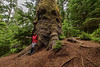 Ancient Sitka spruce