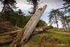 Remains of a mortuary pole, K'uuna Llnagaay (Skedans), Louise Island, Gwaii Haanas, Haida Gwaii, BC