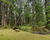 Forest, mosses and dry stream, Hlk'yah Llnagaay, Windy Bay, Haida Gwaii, BC