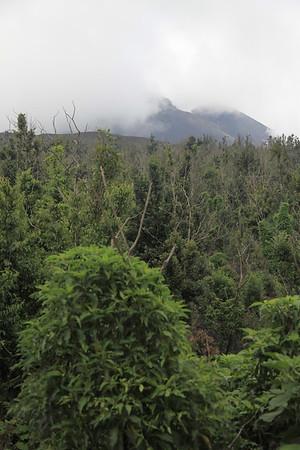 Przyroda dość szybko odbija tereny, które zabrała jej lawa