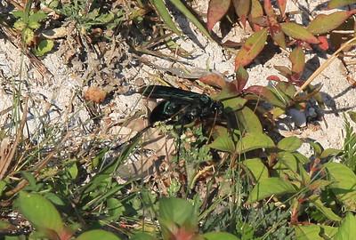 Wielki owad - miał tak z 5 cm