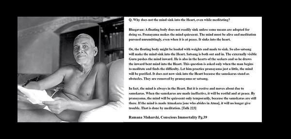 Q. Why does not the mind sink into the Heart, even while meditating?  Bhagavan: A floating body does not readily sink unless some means are adopted for doing so. Pranayama makes the mind quiescent. The mind must be alive and meditation pursued unremittingly, even when it is at peace. It sinks into the heart.  Or, the floating body might be loaded with weights and made to sink. So also satsang will make the mind sink into the Heart. Satsang is both out and in. The externally visible Guru pushes the mind inward. He is also in the hearts of the seekers and so he draws the inward bent mind into the Heart. This question is asked only when the man begins to meditate and finds the difficulty. Let him practice pranayama just a little, the mind will be purified. It does not now sink into the Heart because the samskaras stand as obstacles. They are removed by pranayama or satsang.  In fact, the mind is always in the Heart. But it is restive and moves about due to samskaras. When the samskaras are made ineffective, it will be restful and at peace. By pranayama, the mind will be quiescent only temporarily, because the samskaras are still there. If the mind is made Atmakara [one who abides in Atma], it will no longer give trouble. That is done by meditation. [Talk 223]  Ramana Maharshi, Conscious Immortality Pg.39 Sri Ramana Maharshi #SriRamanaMaharshi #gyan #wisdom #knowledge