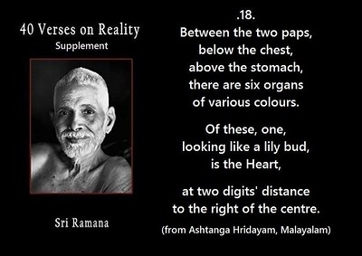 Between the two paaps, below the chest,  above the stomach there are six organs of various colours.  Of these, one, looking like a lily bud, is the Heart, at two digits distance to the right of the centre.  #SriRamanaMaharshi #gyan #wisdom #knowledge