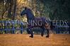StunningSteedsPhoto-HR-5681