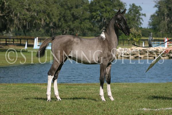 Broadmoor Equestrian