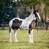 StunningSteedsPhoto-HR-6961