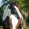 StunningSteedsPhoto-HR-7021tu-crp
