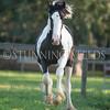 StunningSteedsPhoto-HR-7417