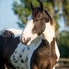 StunningSteedsPhoto-HR-7036crp