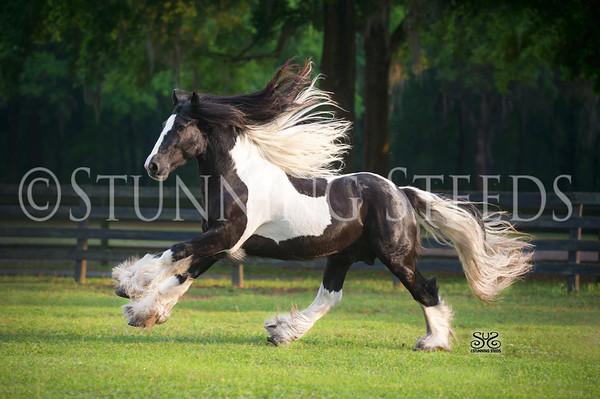 Gypsy Gold Horse Farm