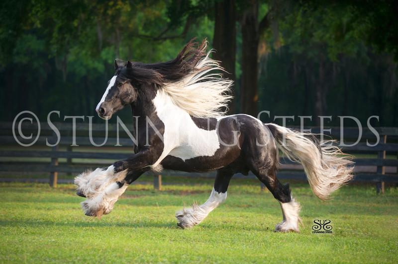 StunningSteedsPhoto-HR-3309-tu