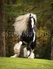 StunningSteedsPhoto-HR-7599tu