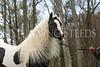 StunningSteedsPhoto-HR-7880