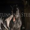 StunningSteedsPhoto-HR-6441