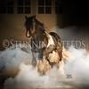 StunningSteedsPhoto-HR-6384tu
