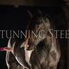 StunningSteedsPhoto-HR-6448