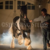 StunningSteedsPhoto-HR-6376