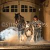 StunningSteedsPhoto-HR-6384
