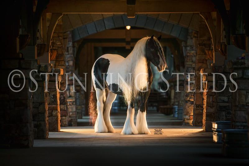 StunningSteedsPhoto-HR-5439-2tu