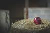 Finaste juläpplet från fruktkorgen hemma låg där så retfullt alldeles precis utom räckhåll, även om man sträckte på nacken så mycket det bara gick!