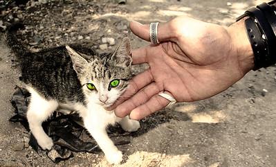 Small Cat, Big Hand.