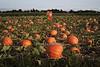 photo by Rob Rich/SocietyAllure.com © 2012 robwayne1@aol.com 516-676-3939