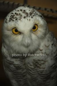 owl photo by Rob Rich/SocietyAllure.com © 2012 robwayne1@aol.com 516-676-3939