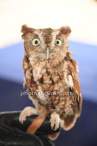 Martino the Owl photo by Rob Rich/SocietyAllure.com © 2012 robwayne1@aol.com 516-676-3939